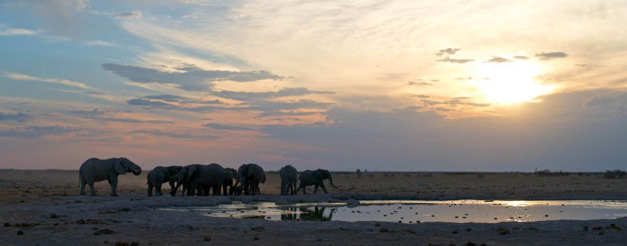 Botswana, acqua e deserto - Africa