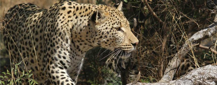 Da Windhoek alle VicFalls (camping)