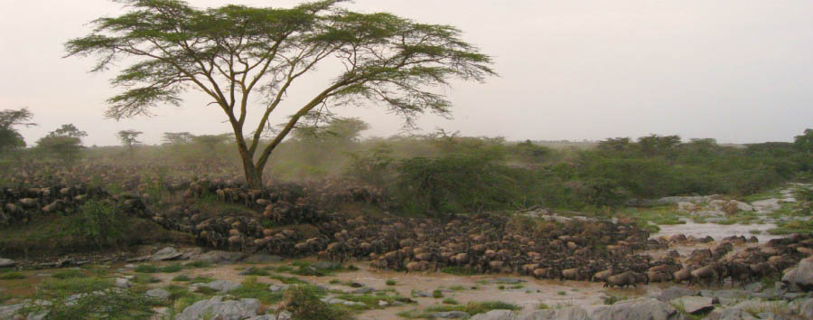 East Africa Migration Discover