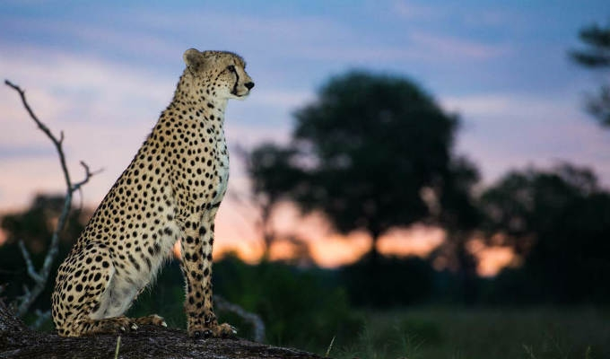 Sudafrica Safari a Sabi Sabi - Africa