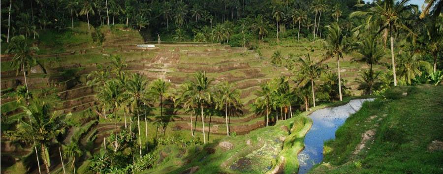 Bali e Java, tra crateri e piantagioni