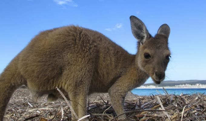 Fantastica Australia