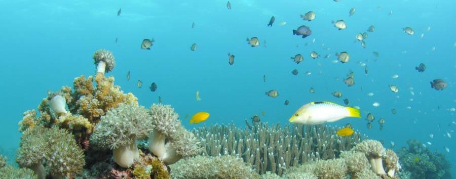 Mare a Cebu