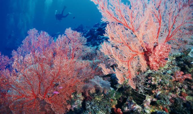 Mare a Okinawa: Main Island
