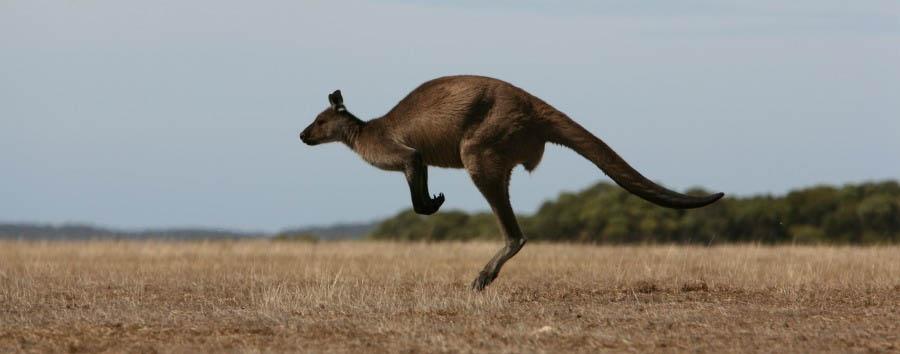 Unique Kangaroo Island Experience