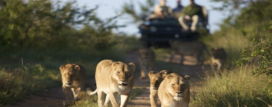 Cape Town, Kruger e Victoria Falls